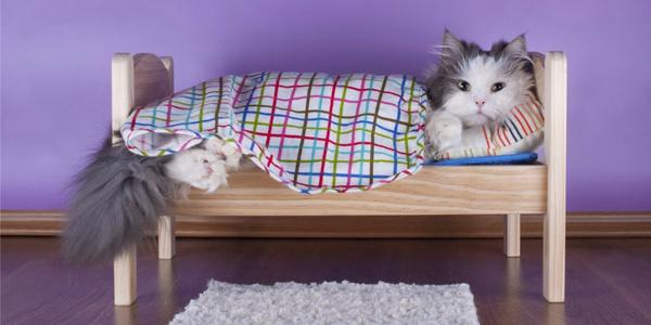 How to Make a Cat Tree - 3 Important Considerations Before You Start Your DIY Cat Tree Project