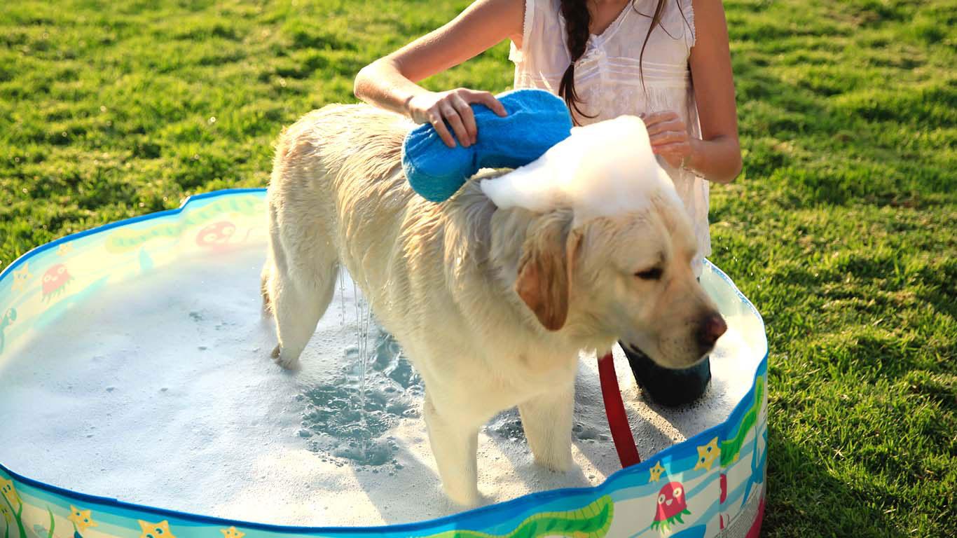 Dog grooming Hollywood FL