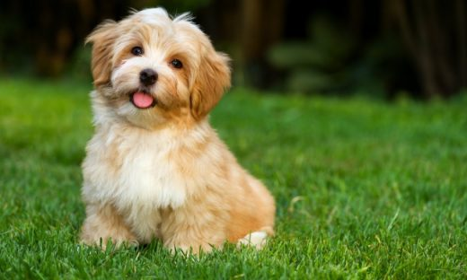 Awesome Tips To Know About Dog Grooming In Hollywood, FL
